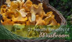 21 Health Benefits of Mushroom