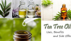 Tea Tree Oil – Uses, Benefits and Side Effects