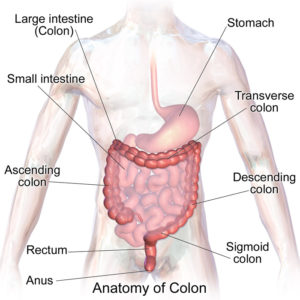 What Is A Colon Cleanse