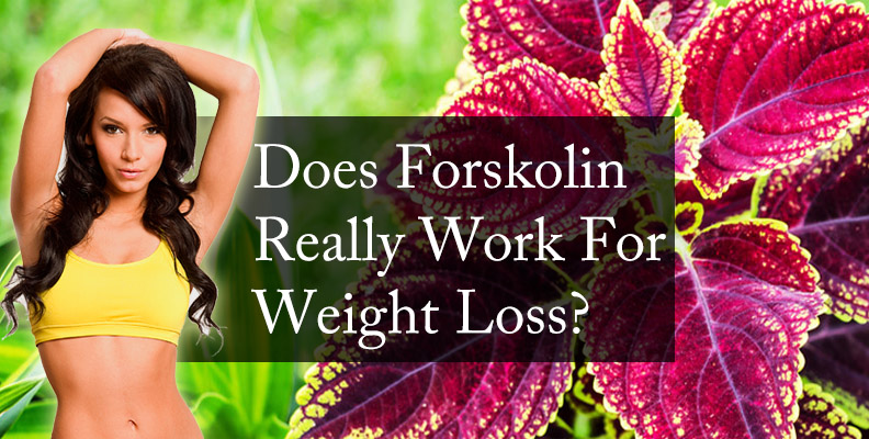 Does Forskolin Really Work For Weight Loss?