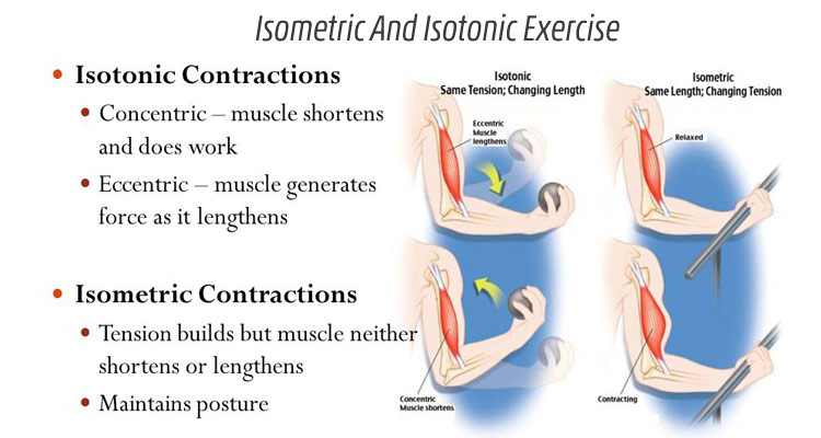 What is an isotonic contraction?